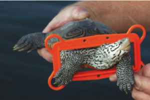 Terrapin and Bycatch Reduction Device (BRD) Courtesy of National Aquarium Waterblog