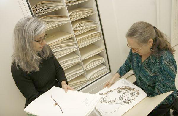 College home to 78,000 plant specimens