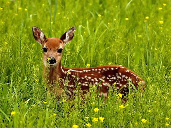 Woods face deer overpopulation
