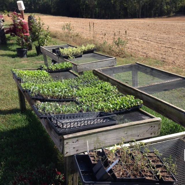 Students help foster sustainability partnership with local farm