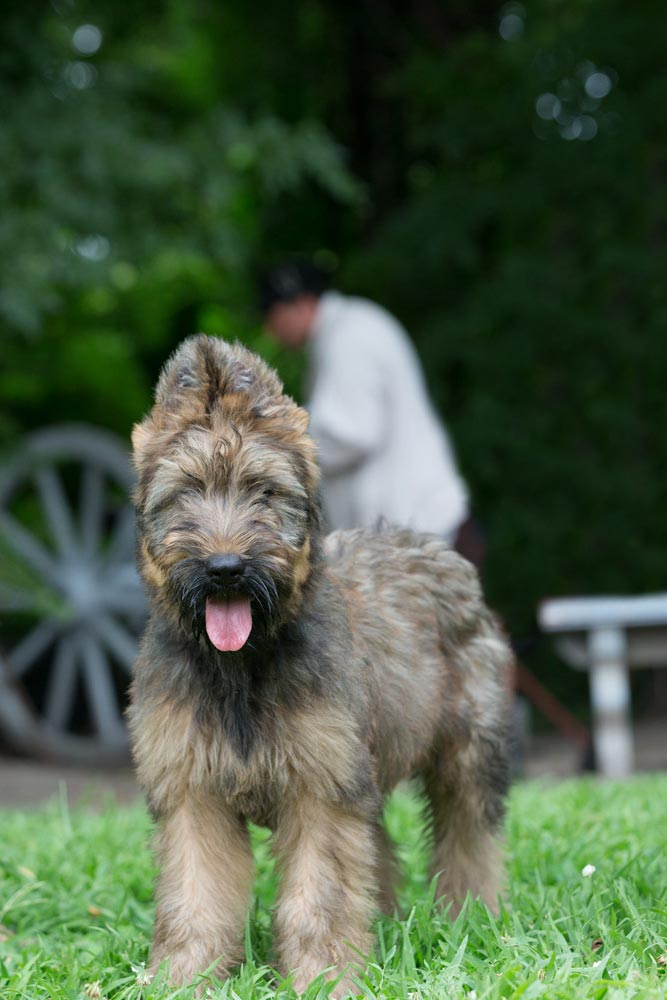 According to a Colonial Williamsburg press release, Thomas Jefferson brought the breed to the United States in 1790. COURTESY PHOTO / THE COLONIAL WILLIAMSBURG FOUNDATION